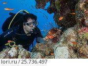 Male scuba diver looks at Red lionfish (Pterois volitans), Red sea, Dahab, Sinai Peninsula, Egypt (2016 год). Редакционное фото, фотограф Некрасов Андрей / Фотобанк Лори