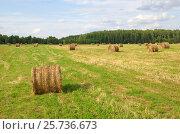 Купить «Летний сельский пейзаж с рулонами скошенной соломы в поле», эксклюзивное фото № 25736673, снято 10 августа 2016 г. (c) Елена Коромыслова / Фотобанк Лори