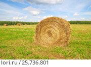 Купить «Рулон скошенной соломы в поле», фото № 25736801, снято 10 августа 2016 г. (c) Елена Коромыслова / Фотобанк Лори