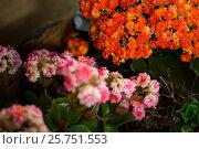 Купить «Flowers in florist shop», фото № 25751553, снято 4 октября 2016 г. (c) Wavebreak Media / Фотобанк Лори