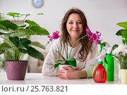 Купить «Young woman looking after plants at home», фото № 25763821, снято 17 января 2017 г. (c) Elnur / Фотобанк Лори