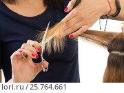 Купить «Close up view of female hairdresser hands cutting hair tips», фото № 25764661, снято 12 июня 2016 г. (c) Людмила Дутко / Фотобанк Лори