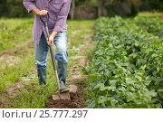 Купить «senior man with shovel digging garden bed or farm», фото № 25777297, снято 25 августа 2016 г. (c) Syda Productions / Фотобанк Лори