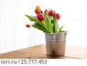 Купить «close up of tulip flowers», фото № 25777453, снято 28 января 2016 г. (c) Syda Productions / Фотобанк Лори