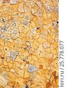 Купить «Lichens on rock, Torridon, Scotland, UK, November.», фото № 25778077, снято 17 августа 2018 г. (c) Nature Picture Library / Фотобанк Лори
