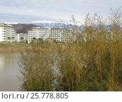 Купить «Заросли молодого бамбука на берегу пруда, здания отелей и снежные горы на горизонте», фото № 25778805, снято 19 февраля 2017 г. (c) DiS / Фотобанк Лори