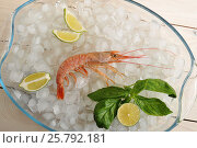 One red tiger shrimp with lime on ice. Стоковое фото, фотограф Денис Иванов / Фотобанк Лори