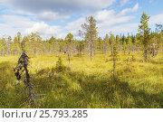 Купить «Лесная поляна в тундре на Соловецком острове», фото № 25793285, снято 26 августа 2013 г. (c) Дмитрий Тищенко / Фотобанк Лори