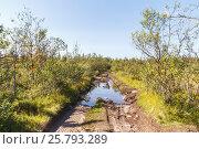 Купить «Лужа на лесной грунтовой дороге летом», фото № 25793289, снято 26 августа 2013 г. (c) Дмитрий Тищенко / Фотобанк Лори