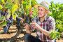 Latino man picking ripe grapes on vineyard, фото № 25794481, снято 21 марта 2017 г. (c) Яков Филимонов / Фотобанк Лори