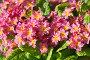 Примула. Цветочный фон, фото № 25824137, снято 12 июня 2014 г. (c) Юлия Бабкина / Фотобанк Лори