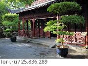 Купить «Beautiful chinese garden with gnarled trees and old buildings at sunny day», фото № 25836289, снято 6 ноября 2015 г. (c) Losevsky Pavel / Фотобанк Лори