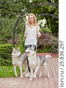 Купить «Young blond woman with two dogs Husky on dog-leads walks in summer park», фото № 25836297, снято 23 июля 2015 г. (c) Losevsky Pavel / Фотобанк Лори