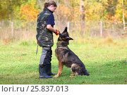 Купить «MOSCOW - SEP 24, 2015: Woman trains sheep dog to sit closer to master on grass field near forest», фото № 25837013, снято 24 сентября 2015 г. (c) Losevsky Pavel / Фотобанк Лори