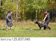 Купить «Two men dog trainers teach doberman at green grass near forest», фото № 25837045, снято 24 сентября 2015 г. (c) Losevsky Pavel / Фотобанк Лори