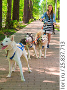 Купить «Girl riding scooter in team of two sled dogs in summer park, focus on two dogs», фото № 25837713, снято 9 мая 2014 г. (c) Losevsky Pavel / Фотобанк Лори