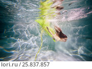 Купить «Young woman in yellow-green dress dives in swimming pool, view from underwater», фото № 25837857, снято 14 мая 2016 г. (c) Losevsky Pavel / Фотобанк Лори