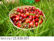 Купить «Basket with red wet cherry and kid sitting (part of body) on grass», фото № 25838001, снято 24 июня 2015 г. (c) Losevsky Pavel / Фотобанк Лори