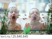 Купить «Two boys with open mouths glued to the aquarium with small fishes at the waterpark», фото № 25840845, снято 28 февраля 2015 г. (c) Losevsky Pavel / Фотобанк Лори