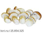 Купить «Белые грибы или боровики (лат. Boletus edulis) на белом фоне», фото № 25854325, снято 28 августа 2016 г. (c) Елена Коромыслова / Фотобанк Лори