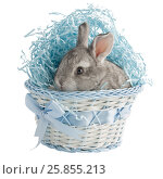 A small gray rabbit in a basket with a bow, isolated on white background. Стоковое фото, фотограф Пельтек Елена Николаевна / Фотобанк Лори