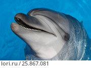Купить «Happy dolphin smiling», фото № 25867081, снято 17 августа 2016 г. (c) Акоп Васильян / Фотобанк Лори