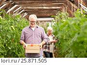 Купить «old couple with box of tomatoes at farm greenhouse», фото № 25871505, снято 25 августа 2016 г. (c) Syda Productions / Фотобанк Лори