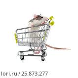 Купить «Симпатичная крыса с покупательской тележкой из супермаркета.», фото № 25873277, снято 18 июня 2019 г. (c) Olesya Tseytlin / Фотобанк Лори