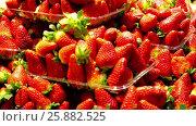Купить «Strawberries in a container», видеоролик № 25882525, снято 22 марта 2017 г. (c) Яков Филимонов / Фотобанк Лори
