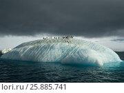 Купить «Beautiful view of icebergs in Antarctica», фото № 25885741, снято 6 февраля 2007 г. (c) Vladimir / Фотобанк Лори