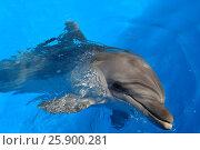 Купить «Дельфин», фото № 25900281, снято 17 августа 2016 г. (c) Акоп Васильян / Фотобанк Лори