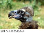 Купить «Орел», фото № 25900293, снято 4 августа 2012 г. (c) Акоп Васильян / Фотобанк Лори