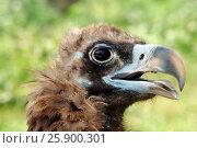 Купить «Орел», фото № 25900301, снято 4 августа 2012 г. (c) Акоп Васильян / Фотобанк Лори