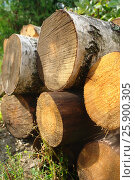 Купить «Лесоматериалы», фото № 25900305, снято 18 августа 2009 г. (c) Акоп Васильян / Фотобанк Лори