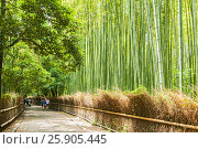 Купить «Path to bamboo forest, Arashiyama, Kyoto, Japan», фото № 25905445, снято 17 июля 2019 г. (c) BE&W Photo / Фотобанк Лори
