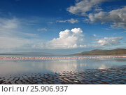 Купить «Lake nakuru landscape with many feeding Greater Flamingos, Kenya», фото № 25906937, снято 12 декабря 2019 г. (c) BE&W Photo / Фотобанк Лори