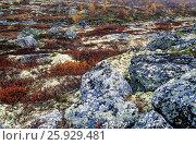 Купить «Tundralandschaft im Herbst / Indian summer in the tundra / Dovrefjell-Nationalpark - Soer Trondelag Norwegen», фото № 25929481, снято 23 июля 2019 г. (c) age Fotostock / Фотобанк Лори