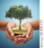 Купить «hands holding green oak tree over blue background», фото № 25939117, снято 12 декабря 2013 г. (c) Syda Productions / Фотобанк Лори