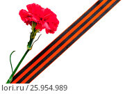 Купить «9 May background. Red carnation with George ribbon isolated on the white background. 9 May concept», фото № 25954989, снято 7 апреля 2017 г. (c) Зезелина Марина / Фотобанк Лори