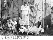 Купить «1987.08.24. СССР. Советское детство.Летние каникулы на даче. Девочки смотрят за курами», фото № 25978913, снято 24 августа 1987 г. (c) Александр С. Курбатов / Фотобанк Лори