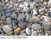 Купить «Pebbles of different size and shape, fon», фото № 25988905, снято 13 апреля 2017 г. (c) Andrejs Vareniks / Фотобанк Лори