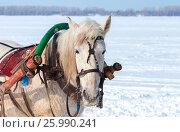 Купить «Голова лошади с хомутом и упряжью в зимний день на фоне снежного поля», фото № 25990241, снято 23 февраля 2019 г. (c) FotograFF / Фотобанк Лори