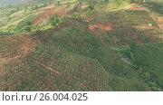 Кофейные плантации во Вьетнаме (2015 год). Стоковое видео, видеограф Pavel Shumeiko / Фотобанк Лори