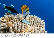 Купить «Small fishes inThe Indian Ocean», фото № 26004129, снято 19 августа 2018 г. (c) М / Фотобанк Лори