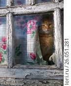 Red cat behind the glass of the old window. Стоковое фото, фотограф Oleksandr Khalimonov / Фотобанк Лори