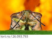 Купить «Жук с длинными усами», фото № 26093793, снято 4 октября 2012 г. (c) Geraldas Galinauskas / Фотобанк Лори