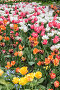 Background of various colorful tulips on the flowerbed, фото № 26095373, снято 16 мая 2016 г. (c) Галина Ермолаева / Фотобанк Лори