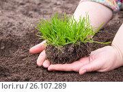 Купить «Grass in woman hands, nature conservation», фото № 26107289, снято 23 апреля 2012 г. (c) Анна Гучек / Фотобанк Лори