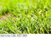 Купить «Summer background», фото № 26107381, снято 6 мая 2013 г. (c) Анна Гучек / Фотобанк Лори