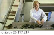Купить «Woman sorting of grapes for wine on the conveyor», видеоролик № 26117217, снято 4 октября 2016 г. (c) Яков Филимонов / Фотобанк Лори